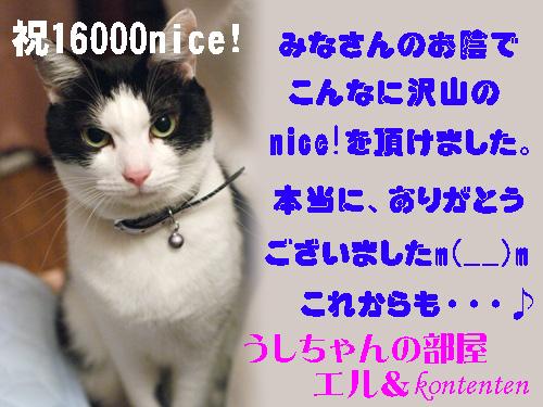 so-net62152.jpg